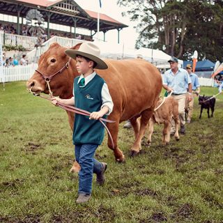 Cattle Competitions | Berry Show